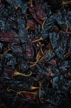 Guajillo dry #peppers by Valery Rizzo.