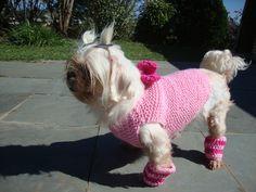 kit roupa + polainas para cães <br>produto sob encomenda <br>preço valido para cães de pequeno porte