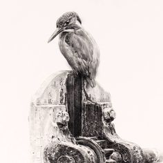 A detail from new drawing, Lock gate & Kingfisher, Graphite on Art board . . . #kingfisher #kingfisherart #kinfisherdrawing #wildlifeart #pencildrawing #drawingdetail #drawing #jonathanpointerart #pencilart#birdart