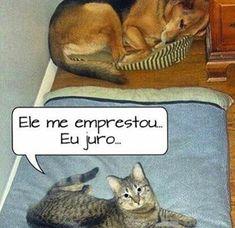 SEI...SEI..rsrs ❤️❤️ #amoanimais  #petmeupet  #cachorro  #gato  #amocachorro  #amogatos