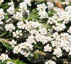 White Waratah Creations: June in the Australian Garden