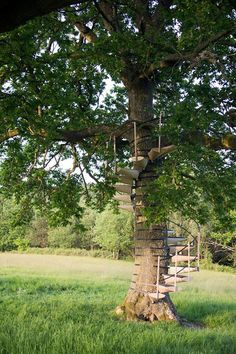 Have you always wanted to know how to build a treehouse? Imagine summer nights spent camping out with your kids in their very own treehouse … telling ghost stories … looking out at the …