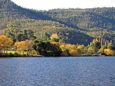 The Derwent River showing spectacular autumn colour in New Norfolk. Derwent Valley, Tasmania, Norfolk, Day Trip, Rivers, Childhood, Lunch, Autumn, Colour