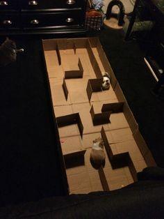 A maze I made for my Guinea pigs
