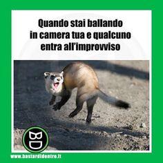 Io #ballo da solo!  Seguici su youtube/bastardidentro #bastardidentro #camera www.bastardidentro.it Funny Test, Funny Jokes, Fanny Photos, Verona, Italian Memes, Funny Scenes, Funny Phrases, Cartoon Pics, Funny Pins