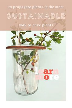 """Hang your plants from the ceiling with a plant hanger from LEERBAEK, Birk is space-saving and the plant hanger. And you can propagate your pants easily with """"Birk"""" Propagation, Plant Hanger, Space Saving, Glass Vase, Flora, Ceiling, Plants, Ceilings, Plant"""