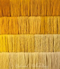 Studio photography of various colors of yarn dyed at the Weaver's shop. Shot for book by Max Hamerick on dyeing textiles; Yellow dyed with Fustic Photo by Barbara Temple Lombardi