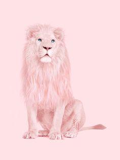 É o leão do Steven!!!!!!!