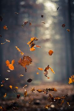 An action nature shot capturing autumn. The dead leaves fall to the ground with delicate sunlight in the background. Best Seasons, Pics Art, Image Hd, Autumn Inspiration, Spiritual Inspiration, Fall Season, Belle Photo, Nature Photography, Children Photography