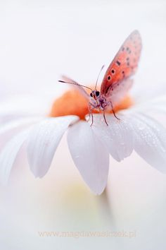 Butterfly by Magda Wasiczek