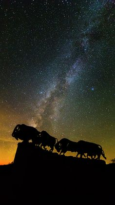 """#CaprockCanyon #Bison Stars"" by Stephen Stookey #MilkyWay (@stephenstookey on Pinterest)"
