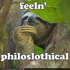 Sloth hahahahah omg @Chen Shao