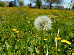 #s7edge #samsung  #s7edgephotography #photographer #travelling #mobilephotography #photography #naturephotography #nature #naturelovers #scenery #manzara #travelphotography #travel  #live #sun #sea #summer #sunset #colour #blue #beauty #holiday  #instagram #wallpaper #instamood #instagood #world #istanbul  #turkey ���������������� http://tipsrazzi.com/ipost/1509303240880859152/?code=BTyH00LDKgQ