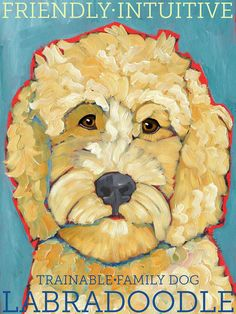 Labradoodle No. 1 - magnets, coasters and art prints