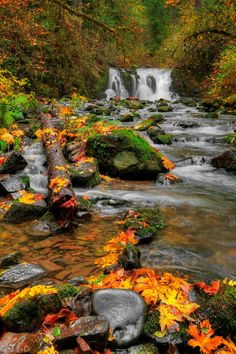 Crystal Falls, Autumn (by Dimension Photography) Fall Pictures, Nature Pictures, Beautiful Waterfalls, Beautiful Landscapes, Beautiful World, Beautiful Places, Fotografia Macro, Autumn Scenery, Seen