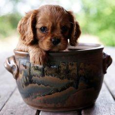 little cutie pie!