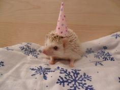 Yay for hedgehogs with birthday hats! :D