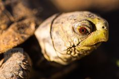 Turtle Silhouette, Turtle Images, Turtle Swimming, Underwater Sea, Close Up Photography, Reptiles, Free Images, Box Turtles, Behavior