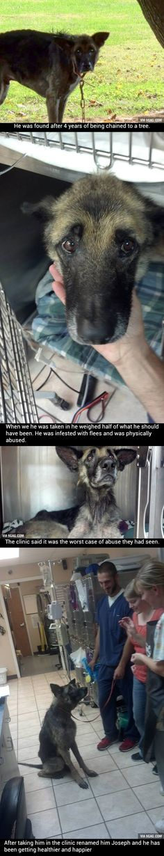 How can humans let this happen to their animals? Those animals depend on us and look up to us! Look at that sad (but still beautiful!!) face! (My cousin's vet clinic took in an abused German Shepherd named Joseph)