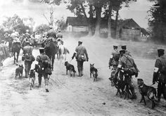 German Red Cross Dogs head to the front, World War I.