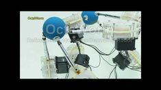 OctaWorm Deformable Octahedron Burrowing Robot
