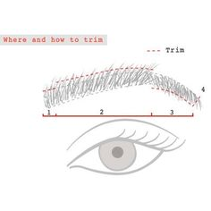 Trim your Brows by Lien Bui - How To | PRIMPED