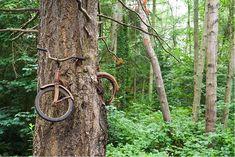 Photos Of Nature Winning The Battle Against Civilization - Bicycle Eaten by A Tree On Vashon Island, Washington Abandoned Ships, Abandoned Buildings, Abandoned Places, Abandoned Factory, Top Photos, Pictures, Dame Nature, Nature Nature, Vashon Island