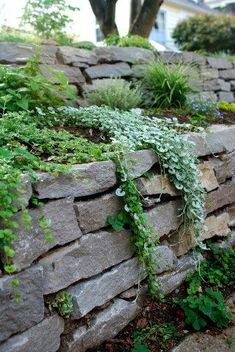 dry stack stone wall with plants over it Hillside Landscaping, Retaining Wall Landscaping, Retaining Wall Gardens, Stone Landscaping, Stone Retaining Wall, Front Yard Landscaping, Landscaping Ideas, Stone Planters, Wall Planters