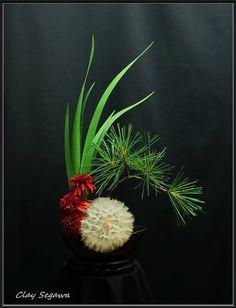 Ikebana by Clayton Segawa Contemporary Flower Arrangements, White Flower Arrangements, Christmas Flower Arrangements, Ikebana Arrangements, Ikebana Flower Arrangement, Bonsai, Flower Show, Flower Art, Bd Design