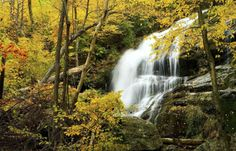 Papel de Parede Cachoeira no Outono
