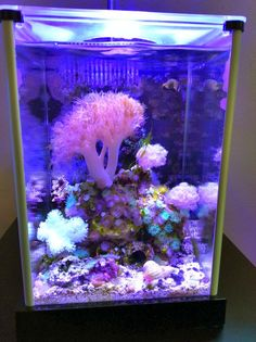 Saltwater Aquarium Fish, Nano Aquarium, Home Aquarium, Saltwater Tank, Marine Aquarium, Reef Aquarium, Marine Fish Tanks, Marine Tank, Aquascaping