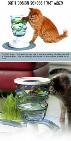 Top 10 Cat Accessories You Can Find On Amazon