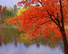 fall in Missouri - I miss seeing color like that - we definitely don't get anything like it in Texas.