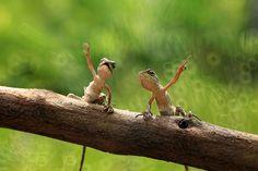 "Unidentified Lizard.      (""punk lizard by iwan pruvic Punk Funk Cool."")"