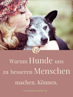 Leben mit Hund   Hund Erziehung   Hunde   #Hunde #Hundeerziehung #Hundeverhalten Goldendoodle, Cats, Lovely Things, Advice, Yoga, Fitness, Inspiration, Swimming, Dog Anxiety