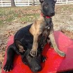 Future Police Canines