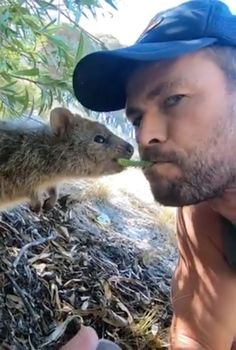 Chris Hemsworth Becoming BFFs With A Quokka Will Give You The Cuteness Overload You Need Today Chris Hemsworth Family, Hemsworth Brothers, Chris Hemsworth Thor, Marvel Jokes, Marvel Funny, Avengers Cast, Marvel Avengers, Techno, Z Cam