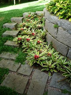 Interesting transition between wall, steps, and lawn. Bromelias @ Agave de Cambui