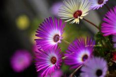 Photo Tuinplanten by Paul Lezwijn on 500px