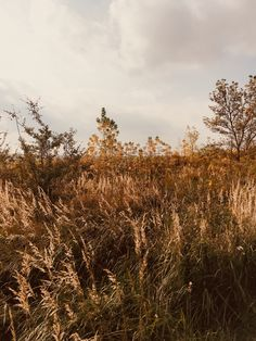#fall #autumn #wallpaper #iphone