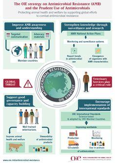 Infografías: OIE - World Organisation for Animal Health