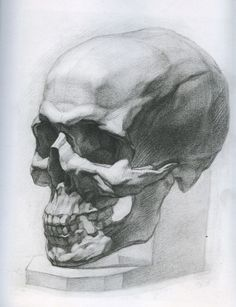 Academic Drawing Female Drawing, Drawing Art, Anatomy Art, Skull, Sketches, Drawings, Instagram Posts, Painting, Artworks