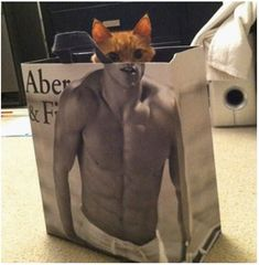 These 33 hilarious perfectly timed photos show how a photographer has to be in the right place at the right time. These funny photos will get you going! Crazy Cat Lady, Crazy Cats, Funny Cute, The Funny, Funny Sexy, Des Photos Saisissantes, Tierischer Humor, Funny Animals, Cute Animals