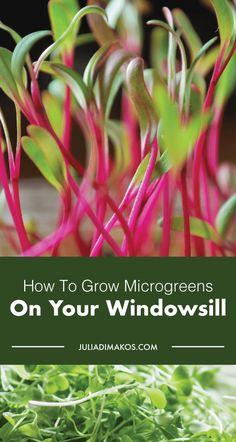 How to Grow Microgreens on Your Windowsill