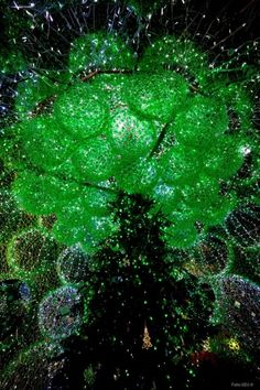 Lithuanian_Town_Welcomes_Christmas_With_a_Tree_Made_of_40,000_Recycled_Bottles_8