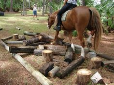 23 Horse Training and Obstacle Course Ideas 23 Horse Training and Obstacle Course Ideas - Art Of Equitation Horse Training Tips, Horse Tips, Trail Riding, Horse Riding, Ranch Riding, George Morris, Horse Exercises, Horse Games, Types Of Horses