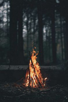 ideas fall nature photography forest autumn for 2019 Fire Photography, Camping Photography, Autumn Photography, Landscape Photography, Photography Ideas, Photography Classes, Photography Backdrops, Dental Photography, Portrait Photography