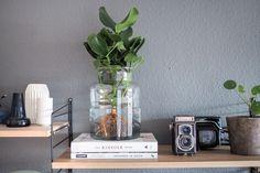 Water Plants, die pflegeleichte Zimmerpflanze. Alles über den neuen Trend, wie du eine Pflanze im Glas pflegst und wo du Water Plants online kaufen kannst!
