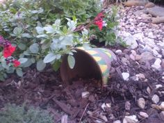 natural way of eliminating your yard of pesty bugs and insects.make a frog house. Frog House, Toad House, Organic Gardening, Gardening Tips, Knockout Roses, Frog And Toad, Lawn And Garden, Shrubs, Planting Flowers