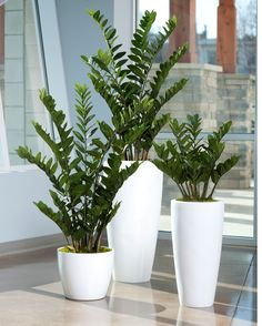The very best plants for your office. Plants that will not die on your desk in your office. For even more office decorating ideas or interior plant tips. Zimmerpflanzen Beautiful Indoor Plants Design in Your Interior Home Plant Design, Garden Design, Decoration Plante, House Plants Decor, Silk Plants, Flowering Plants, Foliage Plants, Green Plants, Potted Plants